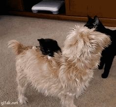 kitty-land: xD
