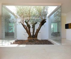 Tree in atrium, will look great in rustic style too, or blend modern/rustic