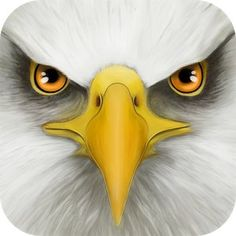 Download Ultimate Bird Simulator android game for Free - http://androidsnack.mobi/ultimate-bird-simulator/