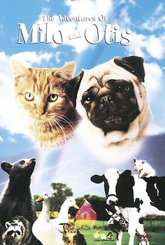 The Adventures of Milo and Otis [PN1997 .A38 1999] The adventures of a young cat and a dog as they find themselves accidentally separated and each swept into a hazardous trek. Director:Masanori Hata Writers:Masanori Hata (story), Mark Saltzman (screenplay) Stars:Kyôko Koizumi, Milo, Dudley Moore