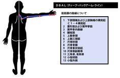 小指対立筋、小指外転筋、短小指屈筋、短掌筋に関する充実したデータをここでは閲覧できます。目次は以下になります。 …