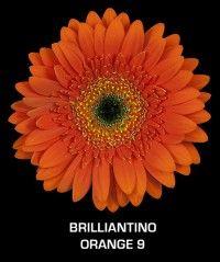 Gerbera Browser » Welcome to Ever-Bloom