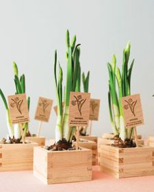 Budding bulbs bought from a local nursery are nestled into sake cups beneath beds of rocks. To turn them into take-home favors, use a rubber stamp to imprint planting instructions onto wooden posts.
