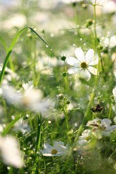 Flowers White Garden Ana Rosa 35 Ideas For 2019