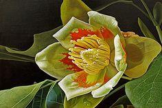 Dietrich Moravec: Liriodendron tulipifera, 2012
