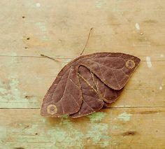 fabric moth. #HandmadeCharlotte #EtsyCustom