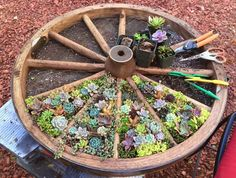 DIY wagon wheel with planted flowers in them!