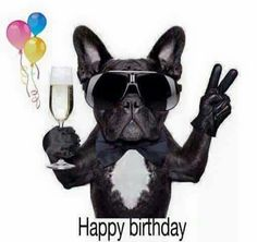 Send Free Party Dog Happy Birthday Card for Brother to Loved Ones on Birthday & Greeting Cards by Davia. It's free, and you also can use your own customized birthday calendar and birthday reminders. Happy Birthday Brother Funny, Birthday Quotes Funny For Him, Happy Birthday Tony, Happy Birthday Wishes For Him, Birthday Images Funny, Brother Birthday Quotes, Birthday Cards For Brother, Birthday Wishes Funny, 50 Birthday