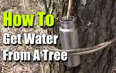 How To Get Water From A Tree - Survival - SHTF, Emergency Preparedness, Survival Prepping, Homesteading