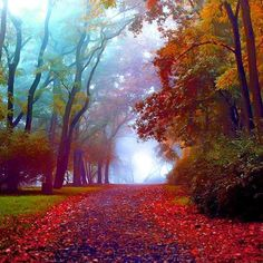 Amazing fall colors in Park Kasprowicza, Szczecin, Poland. Beautiful World, Beautiful Places, Amazing Places, Beautiful Beautiful, Wonderful Places, Foto Nature, Belle Photo, Pretty Pictures, Fall Pictures