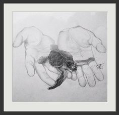 Turtle in child's hands. paper, pencil