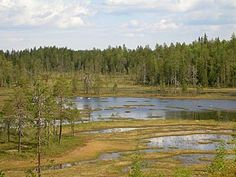Swamp views in the very eastern Kainuu near the borderline between Finland and Russia.