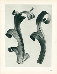 1928 K. Blossfeldt Photoengravings, - Mira Parker, Design & Antiques - Brands One Kings Lane Karl Blossfeldt, Appropriation Art, Shadow Silhouette, Plant Fungus, Socialist Realism, Nature Plants, Natural Forms, Vintage Art, Photo Art
