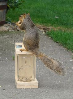 Bird Proof - Squirrel Feeder