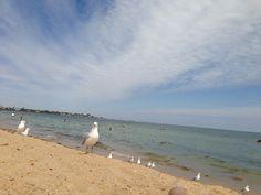 Elwood seagull