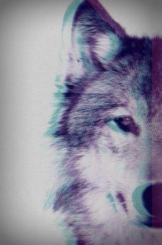 wolf and animal Bild