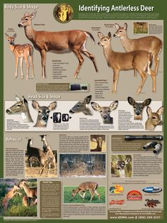 how to archery fish Quail Hunting, Deer Hunting Tips, Hunting Guns, Archery Hunting, Bow Hunting, Hunting Stuff, Whitetail Hunting, Hunting Quotes, Bowfishing