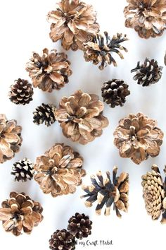 How to Clean Pine Cones for Crafts – Sustain My Craft Habit Pine Cone Art, Pine Cone Crafts, Pine Cones, Dog Treat Recipes, Healthy Dog Treats, Healthy Foods To Eat, Crafts For Teens, Crafts To Sell, Diy And Crafts