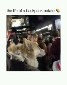 Funny Animal Memes, Funny Animal Videos, Funny Animal Pictures, Funny Dogs, Cute Little Animals, Cute Funny Animals, Funny Cute, Cute Puppies, Cute Dogs