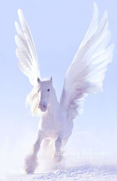 Bliss Stellan's Royal Shifter form is a white pegasus though she is unaware that this is a royal form (sorry I just really wanted to change her shifter form since I came up with a idea) Cute Fantasy Creatures, Mythical Creatures Art, Mythological Creatures, Magical Creatures, Unicorn And Fairies, Unicorn Fantasy, Unicorn Art, Most Beautiful Horses, Animals Beautiful