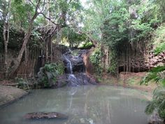 The Latille Waterfall is the centerpiece of an organic garden in eastern St. Organic Gardening, Caribbean, Waterfall, Centerpieces, Plants, Center Pieces, Flora, Rain, Organic Farming