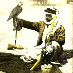 Bedu Falconer - Traditional Arabic Falconry