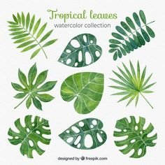 Tropical leaves collection in watercolor style Free Vector Watercolor Plants, Watercolor Leaves, Watercolor Art, Estilo Tropical, Best Friend Tattoos, Plant Art, Tropical Leaves, Tropical Art, Leaf Art