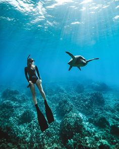 Turtles for dayz 🐢📸 by Underwater Photos, Underwater Photography, Travel Photography, Film Photography, Landscape Photography, Pregnancy Photography, Wedding Photography, Street Photography, Fashion Photography