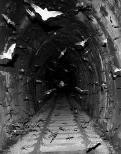 Goth: The #Undead ~ Bats in a dark passage.