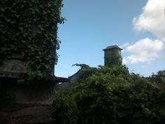 Casa de Varisto, as silvas e as edras están acabando con ela, vella arquitectura galega que se vai perder, debe posuir lareira e fornos.