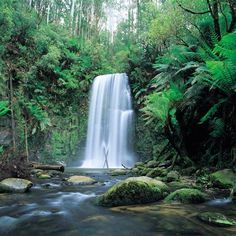 Dandenong Ranges in Australia