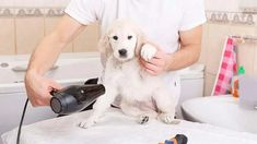 If your dog has any mats or tangles it may be a good idea to give them a nice brush and trim off mats/knots before bath time. Water. Washcloth. Cotton Balls. Shampoo. Massage. Rinse. Conditioner. Dog Grooming Clippers, Dog Cleaning, Dog Training, Your Dog, Dogs, Dog Training School, Pet Dogs, Doggies, Pooch Workout