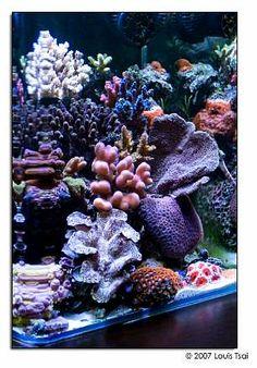 Tank of the Month - April 2007 Saltwater Aquarium Fish, Saltwater Tank, Reef Aquarium, Reef Tanks, Fish Tanks, Cool Tanks, Ocean Creatures, Salt And Water, Corals