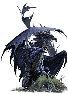☆ Young Black Dragon :: By *BenWootten ☆