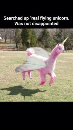 I looked up real flying unicorn and I was not disappointed
