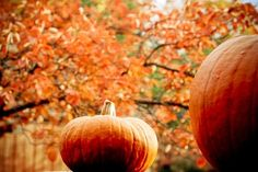 """A year-round celebration of the seasons. """"To be interested in the changing seasons is a happier state of mind than to be hopelessly in love with spring. Autumn Day, Autumn Leaves, It's The Great Pumpkin, Olivia And Joy, Fall Pictures, Autumn Photos, Fall Pics, Autumn Scenes, Pumpkin Art"""