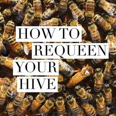 This week, you are sparedfrom reading anything at all! Instead, you can absorb your dose of beekeeping knowledge by watching the video below. I teamed up with local queen breeders Wildflower Meado…