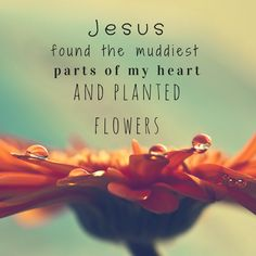 Jesus found the muddiest parts of my heart and planted flowers