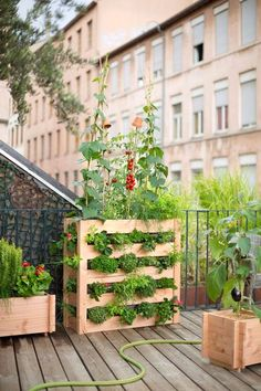 2. It installs a vegetable vertically on its balcony or terrace town