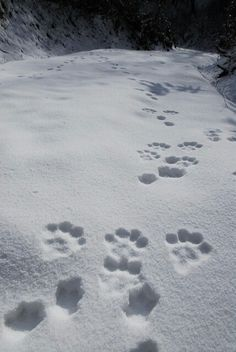 I'm still waiting to see Abby and Buddy's footprints in the snow! Come in SNOW! I Love Snow, I Love Winter, Winter White, Winter Walk, Winter Schnee, Winter Magic, Winter's Tale, Snowy Day, Snow Scenes