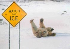 Dammit! They should put up a sign to warm other bears!
