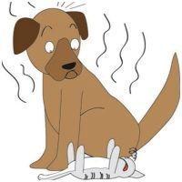 É comum cachorros exalarem um cheiro forte, e para acabar com esse mau cheiro é difícil encontrar soluções eficazes em supermercado! Os produtos prontos, c
