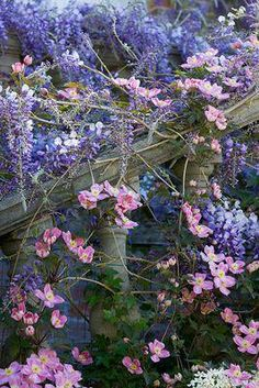 cascades of purple wisteria and pink clematis