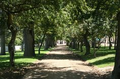Set in magnificent gardens with views over Cape Town, our estate has consistently produced top quality wines over the centuries. www.grootconstantia.co.za
