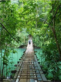 De ongerepte regenwouden en de ruige natuurlijke schoonheid van het Osa Peninsula maken deze regio een van de mooiste gebieden in Costa Rica!
