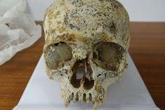 Pollen sheds light on Bronze Age beaker burial