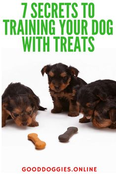 Dog Obedience Training Training your dog with treats can be one of the best ways to an obedient dog that listens. But how does it work? Check out these dog training tips for using dog treats. Training Your Puppy, Dog Training Tips, Potty Training, Training Schedule, Training Quotes, Agility Training, Crate Training, Training Classes, Dog Agility
