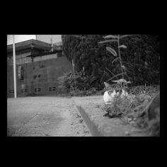 https://flic.kr/p/wePHZk | Cat July 2015  #cat #smallcats #blackandwhitephotography