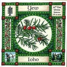 Yew, Ogham name Ioho, rules 22nd December, Winter Solstice. The latin name for yew is taxius, the Greek word for bow is toxos, Toxin means poison so it is not surprising that Yew tree wood is used to make the best longbows and the poison for arrows. Yew trees planted in churchyards were thought to protect the corpses buried there and preserve their spirits ready for rebirth.
