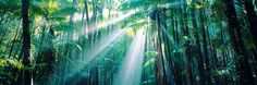 One day you will hang above my bed... Enchanted Forest by Peter Lik